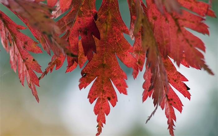 leaves autumn spots-photography HD wallpaper Views:3837 Date:12/10/2013 7:32:10 AM