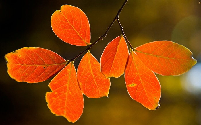 leaves yellow autumn branch-photography HD wallpaper Views:3897 Date:12/10/2013 7:35:15 AM