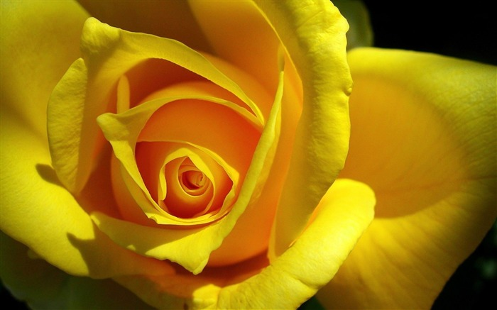 rose yellow bud petals-photography HD wallpaper Views:3332 Date:12/10/2013 7:36:13 AM