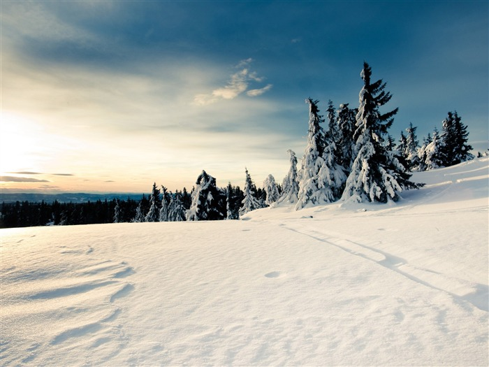 sun forests nature snow-Seasons HD Wallpaper Views:1806