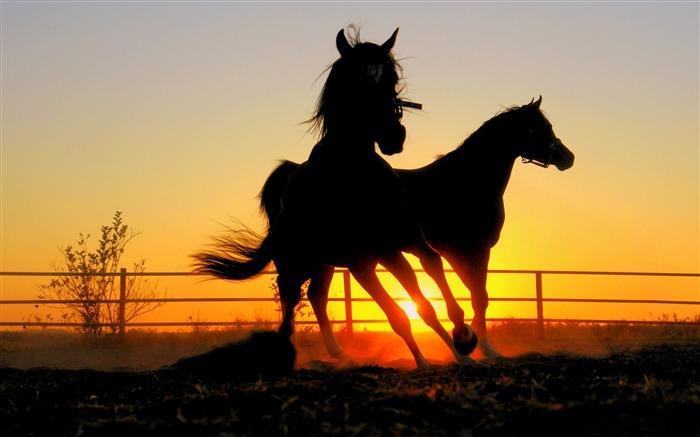 cny horse wallpaper - photo #21