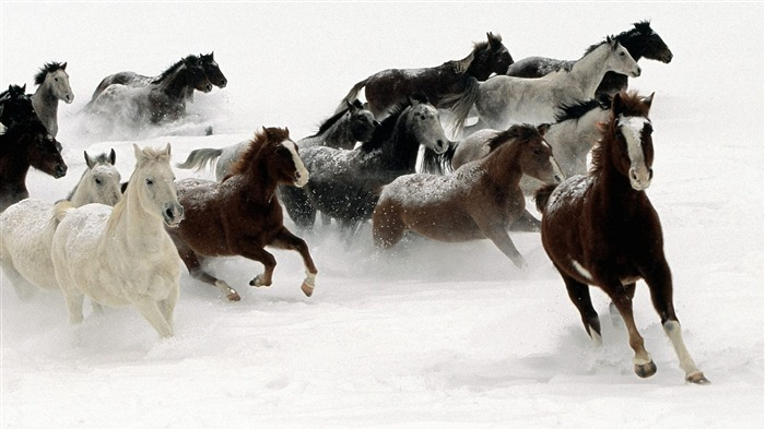 2014 Chinese New Year of the Horse Wallpaper 10 Views:2965