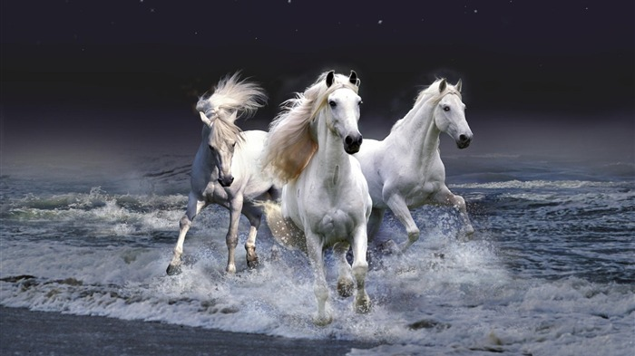 2014 Chinese New Year of the Horse Wallpaper 11 Views:2720