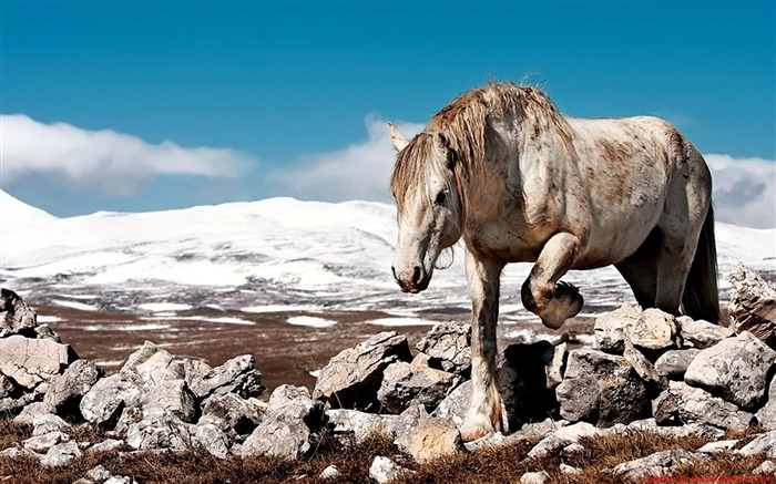 cny horse wallpaper - photo #30