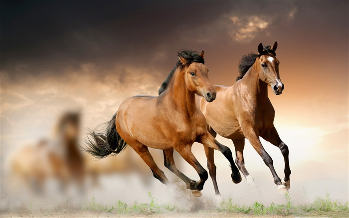 2014 Chinese New Year of the Horse Wallpaper Views:16730