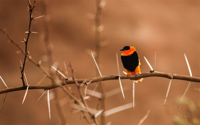 bird branch blur-HD Photo wallpaper Views:3767