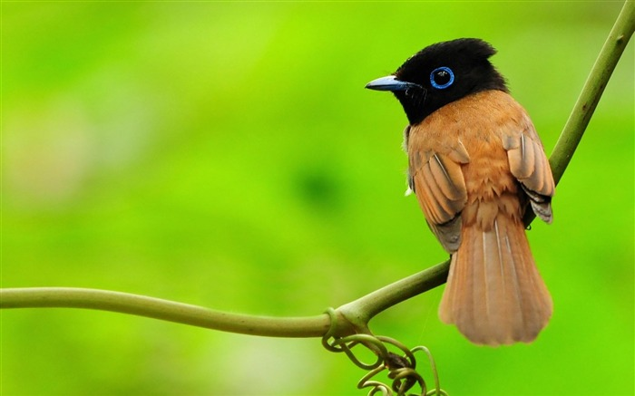 bird branch sit-HD Photo wallpaper Views:3441