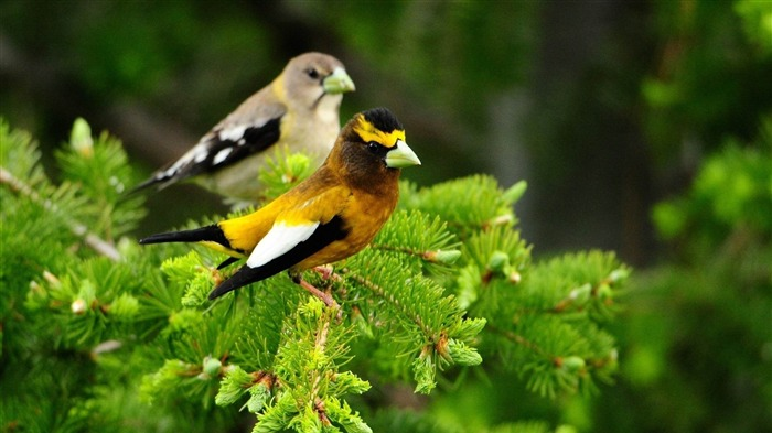 birds pair sit leaves-HD Photo wallpaper Views:2878