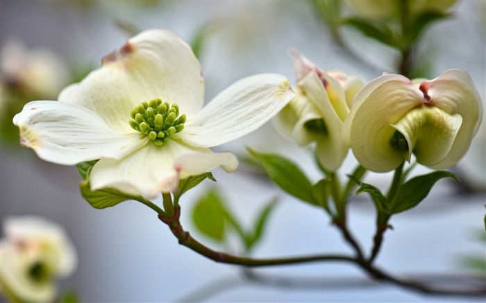 flower plant white-Plants Photo Wallpaper Views:2730