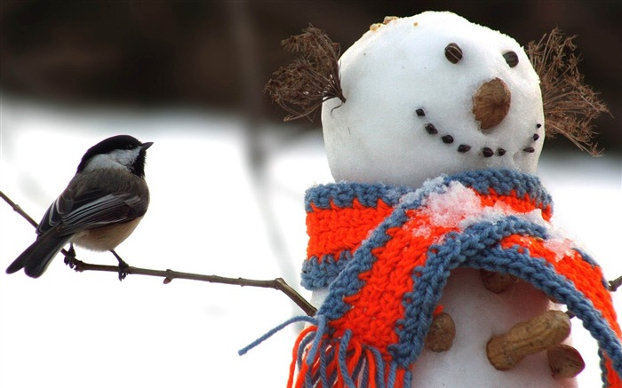 tomtit bird snowman-HD Photo wallpaper Views:1676