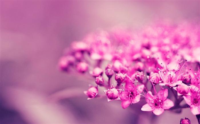 花卉植物背景-图片高清壁纸