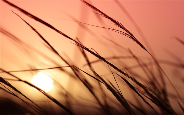 grass sunlight sky-Macro photography wallpaper Views:3460