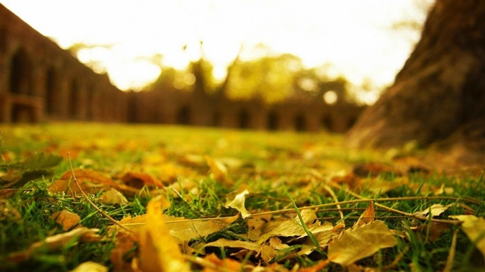 leaves earth grass lawn-Photo Wallpaper Views:3082