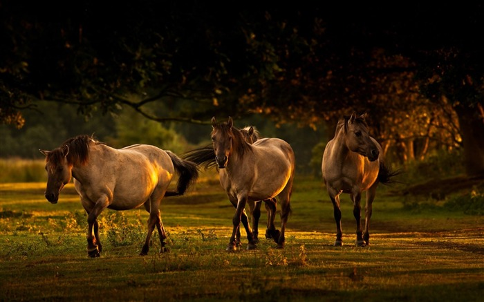 nature horses-Animal Photo Wallpaper Views:2815 Date:2/16/2014 2:21:14 AM