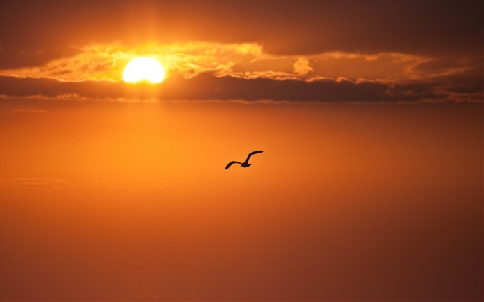 orange sun disk bird-Photo Wallpaper Views:4037