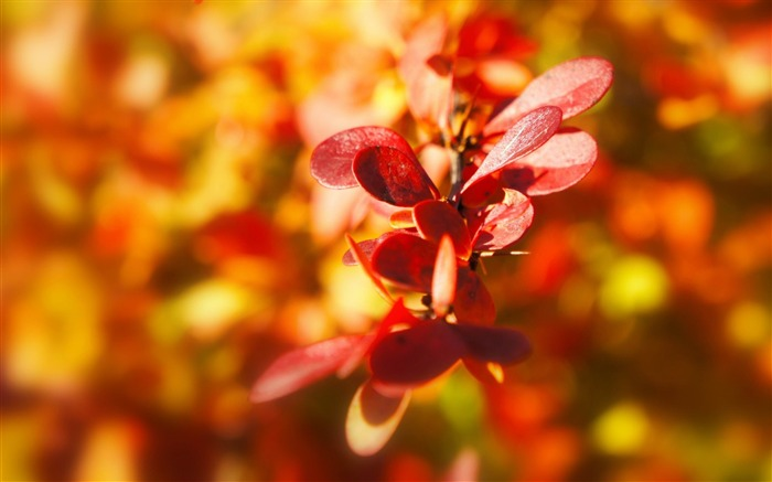 plant autumn leaves-Image HD Wallpapers Views:2376
