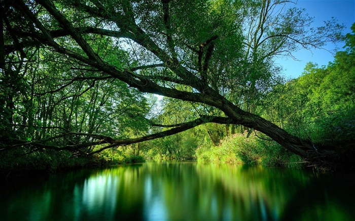 tree branches water lake-Landscape Photo Wallpaper Views:2967