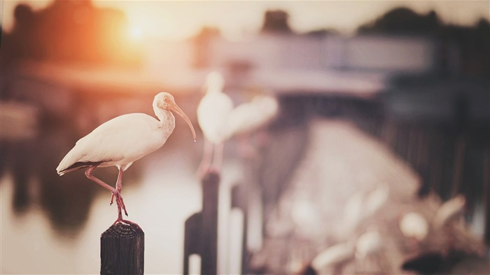 bridge birds bokeh-Animal photo wallpaper Views:2375