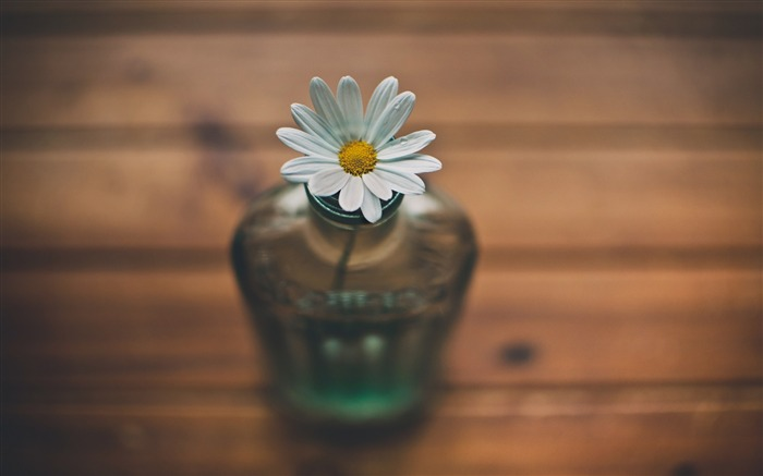 white daisy vase-Flowers HD Wallpaper Views:2507