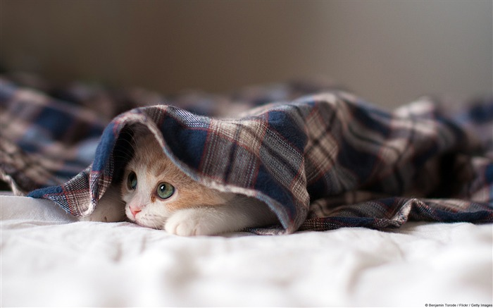Hidden Kitten-Windows Photo Wallpaper Views:2490