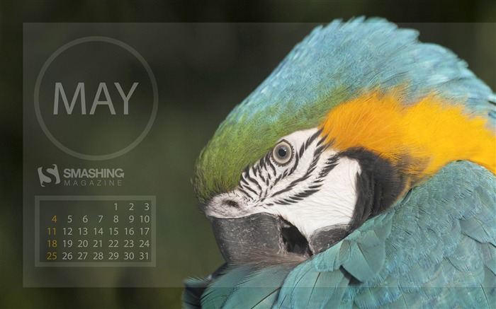 Spring Bird-2014 calendar wallpaper Views:1733