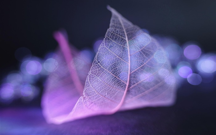Transparent leaf vein abstract wallpaper Views:19920