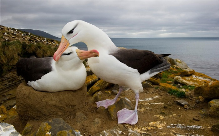 Two seabirds-Animal Photo Wallpapers Views:3117