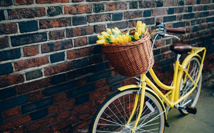 bike flowers yellow tulips-High quality wallpaper Views:2764