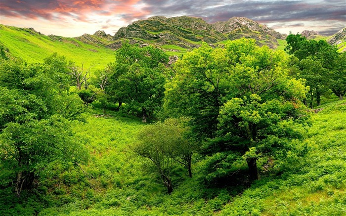 trees green brightly-Nature Photo Wallpaper Views:2753