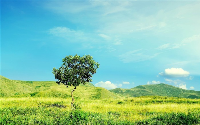 the lonely tree-Best Landscape Wallpaper Views:1961