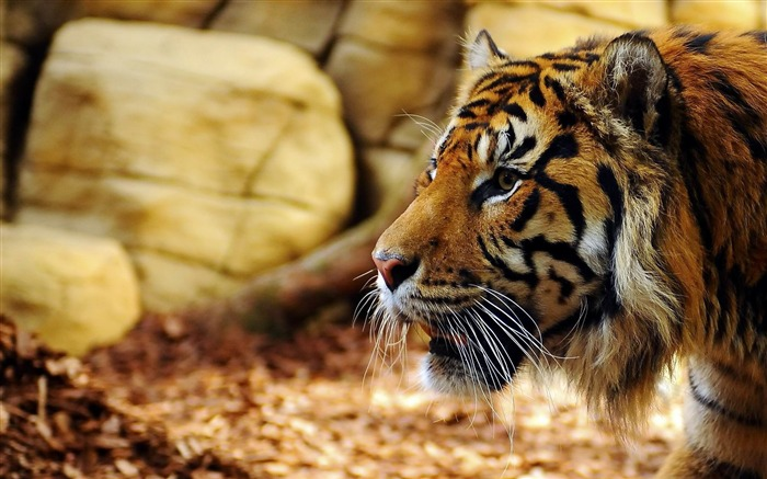 Best Animal World HD Desktop Wallpaper Views:6564