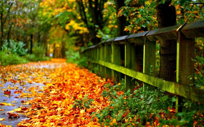 Country Road Autumn-landscape photo wallpaper Views:2724