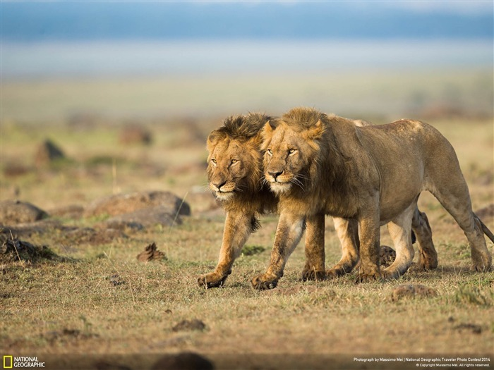 Two Brothers-National Geographic Wallpaper Views:3541 Date:7/22/2014 8:51:37 AM