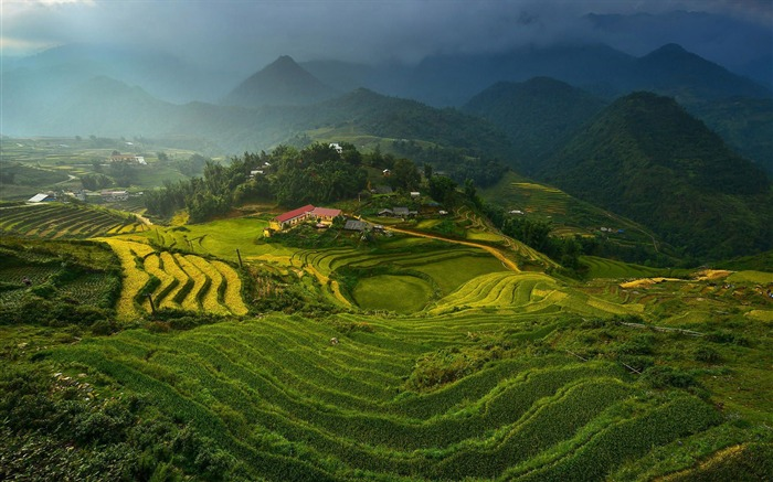 rice terraces in vietnam-Nature HD Wallpaper Views:7313 Date:7/6/2014 1:49:19 AM