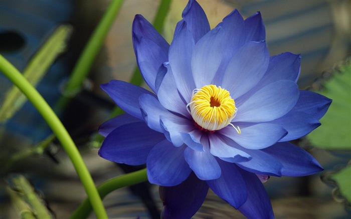 Blue Flower Macro-Plants HD Wallpaper Views:2856