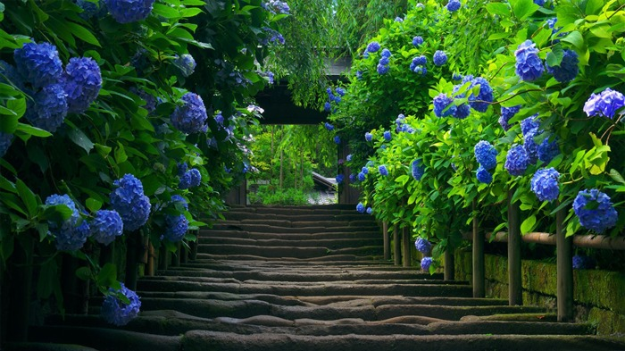 blue flowers road-Nature Photo Wallpaper Views:3460