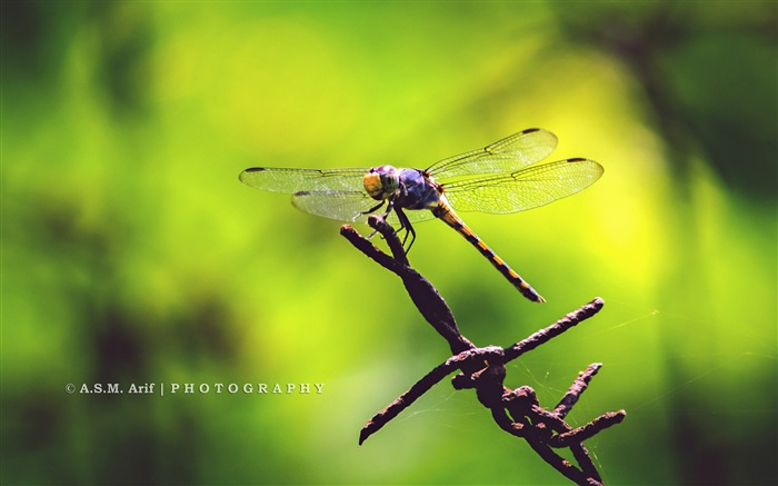 dragon fly-Animal photo wallpaper Views:3394 Date:8/4/2014 8:55:21 AM