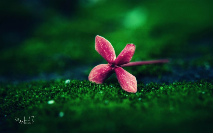 flower on grass-Plants HD Wallpaper Views:2634
