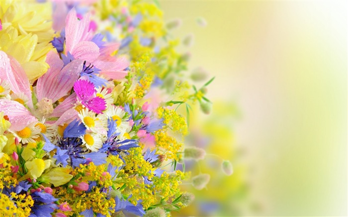 flowers blur field-Plants HD Wallpapers Views:3566