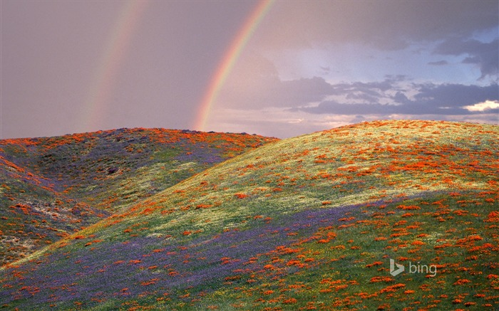 Beautiful rainbow flowers-Bing theme wallpaper Views:2090