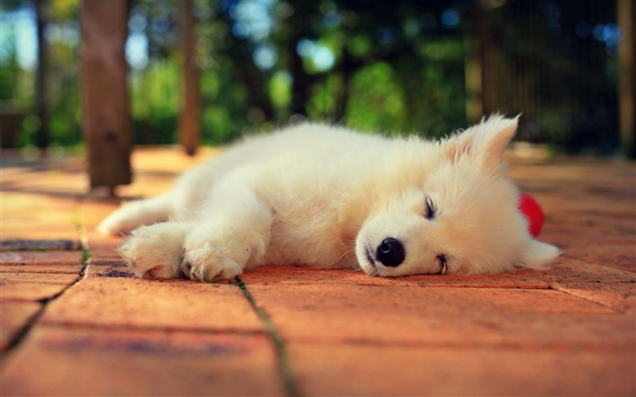 可爱的小动物