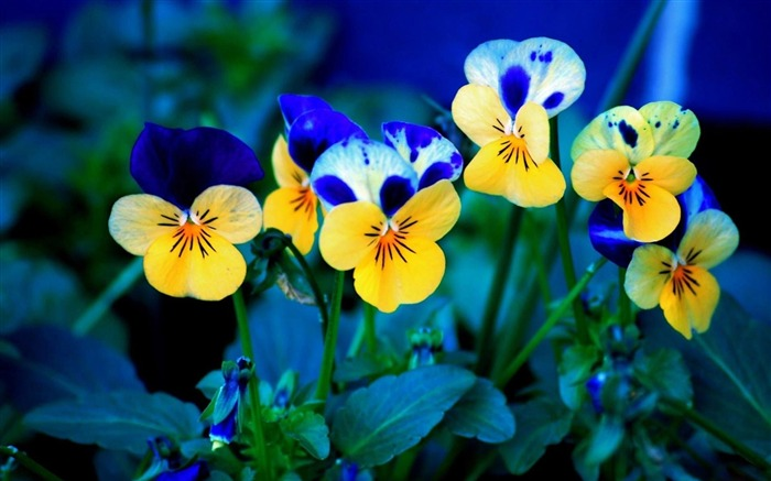 Beautiful flowers plants HD Photo Wallpaper Views:8937