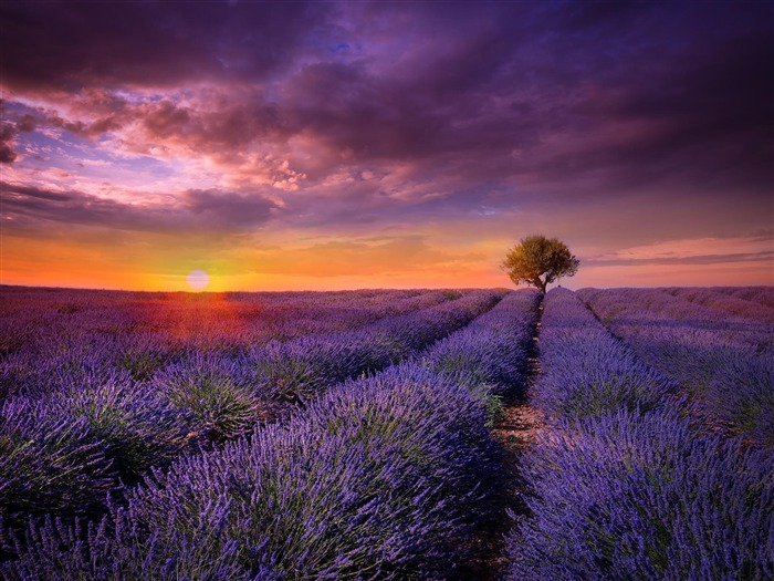 Sunset Over Lavender Scenery HD Wallpaper Wallpapers View