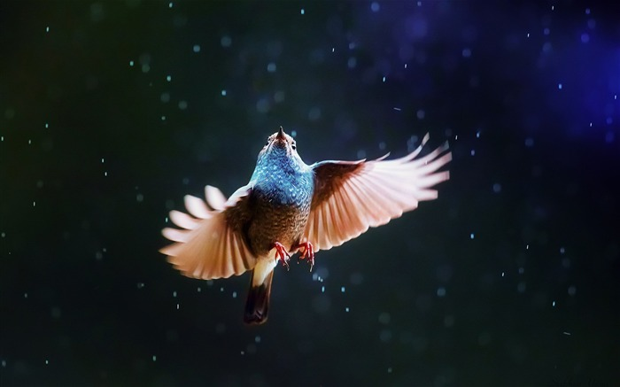 Bird Flying In Rain-Animal Photo Wallpaper Views:4770 Date:11/3/2014 5:47:18 AM