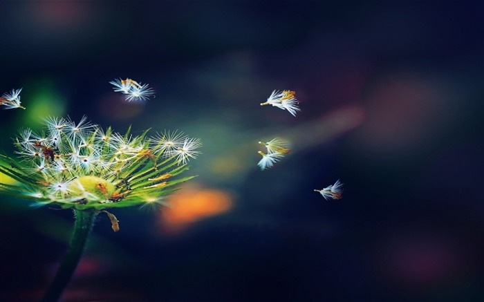Dandelion Seeds-Abstract widescreen wallpaper Views:3276