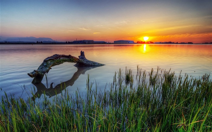 Dead Tree In Lake Sunset-Photos HD Wallpaper Views:3557