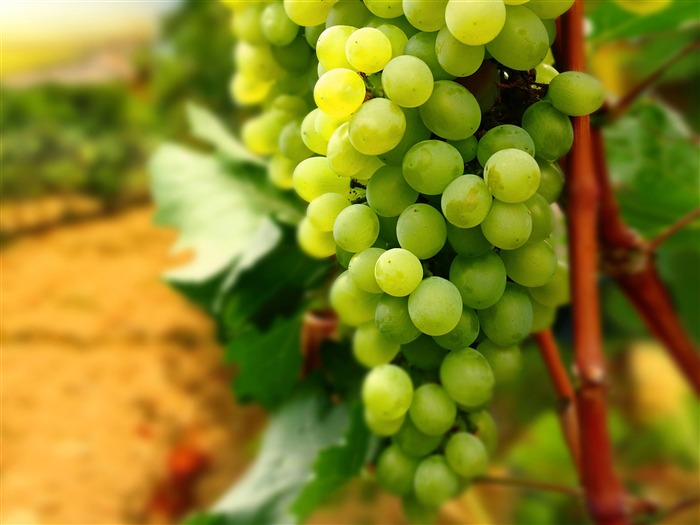 Green Grapes-High quality HD Wallpaper Views:2968