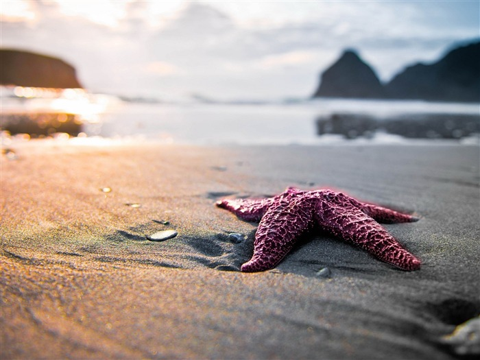 Starfish On Beach Sunset-HD Desktop Wallpaper Views:2851