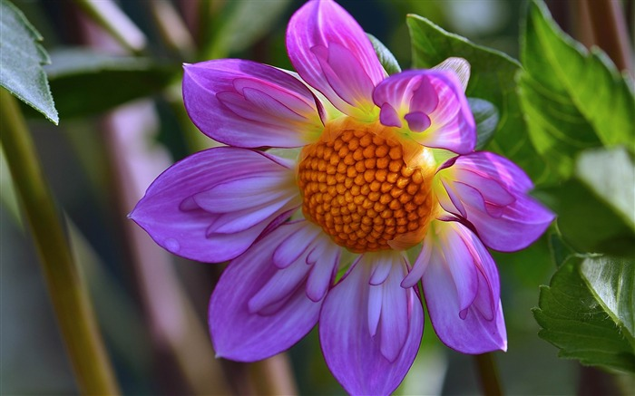 2014 Flowers selection of high-quality HD Wallpaper Views:5821