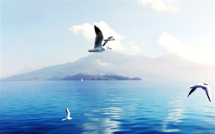 seagulls in switzerland-High quality HD Wallpaper Views:1424